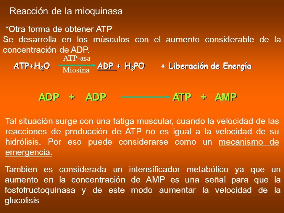 *Otra forma de obtener ATP Se desarrolla en los músculos con el aumento considerable de la concentración de ADP. Reacción de la mioquinasa ATP+H 2 O A