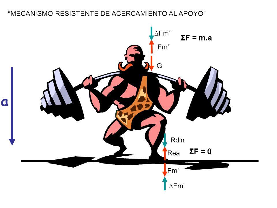 MECANISMO RESISTENTE DE ACERCAMIENTO AL APOYO a Fm Rea ΣF = 0 Fm Rdin Fm G ΣF = m.a