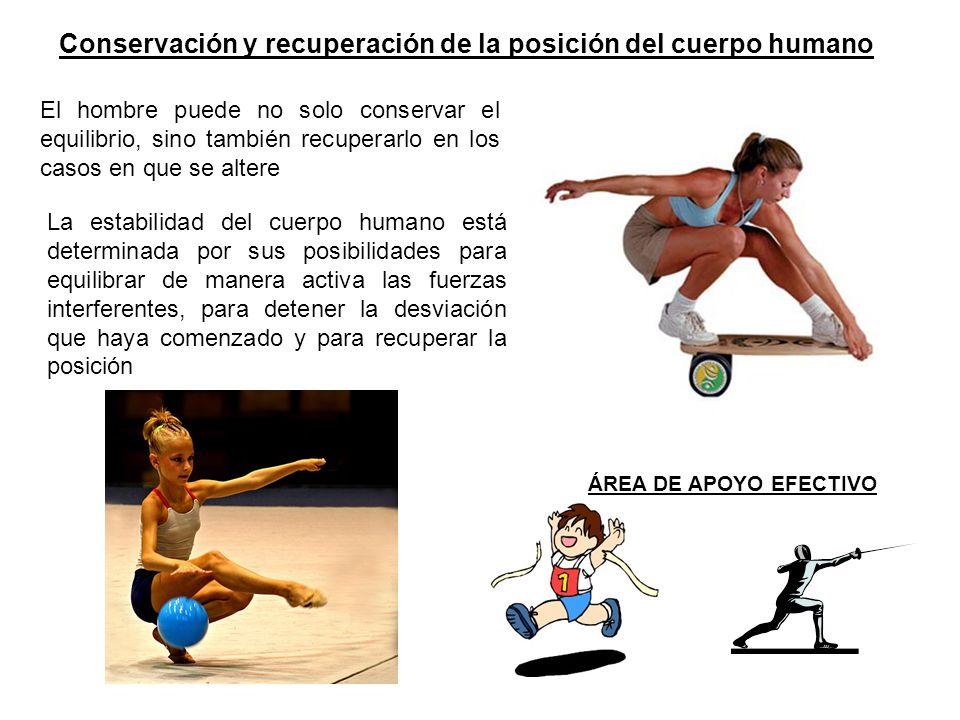 Conservación y recuperación de la posición del cuerpo humano ÁREA DE APOYO EFECTIVO El hombre puede no solo conservar el equilibrio, sino también recu