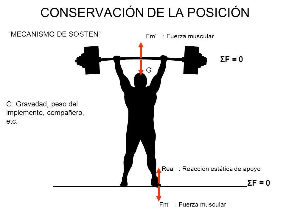 CONSERVACIÓN DE LA POSICIÓN MECANISMO DE SOSTEN Fm : Fuerza muscular Rea : Reacción estática de apoyo ΣF = 0 G Fm : Fuerza muscular ΣF = 0 G: Gravedad