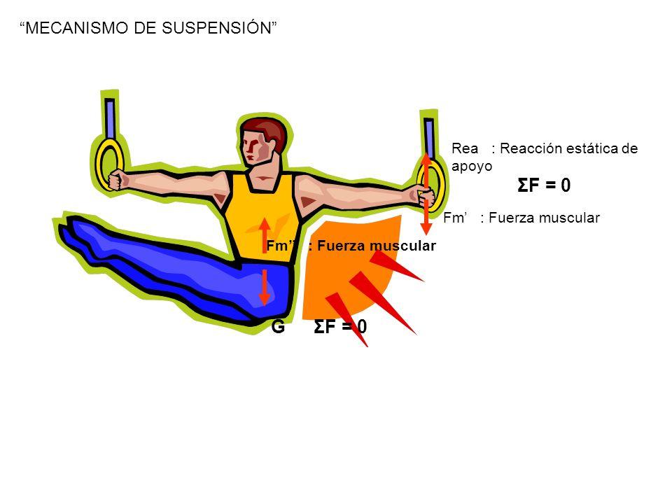 VARIACION DEL MOVIMIENTO DE ROTACIÓN DEL MIEMBRO Sobre cualquier cuerpo de una u otra manera siempre están aplicadas fuerzas de frenaje Al aplicar una fuerza externa al miembro provoca aceleración angular Mz (Fe) = Iα Mz(Fe): Momento de la fuerza externa I: Momento de inercia α: aceleración angular Fuerzas externas: Tracciones de los músculos La reacción de los miembros vecinos Fza de gravedad Fza de inercia de las cargas Etc.