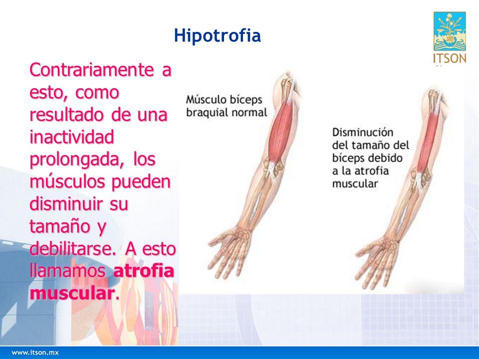 Hipotrofia Contrariamente a esto, como resultado de una inactividad prolongada, los músculos pueden disminuir su tamaño y debilitarse. A esto llamamos