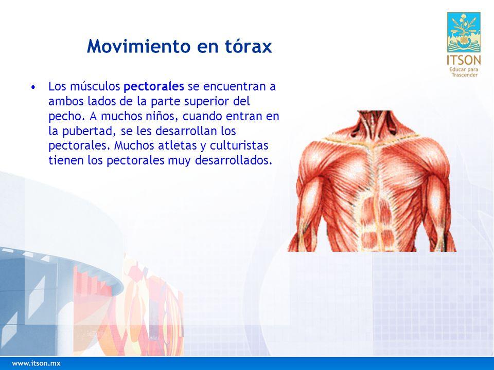 Movimiento en tórax Los músculos pectorales se encuentran a ambos lados de la parte superior del pecho. A muchos niños, cuando entran en la pubertad,