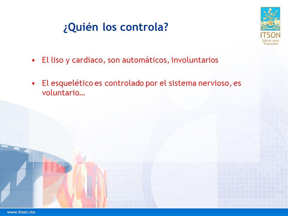 ¿Quién los controla? El liso y cardiaco, son automáticos, involuntarios El esquelético es controlado por el sistema nervioso, es voluntario…