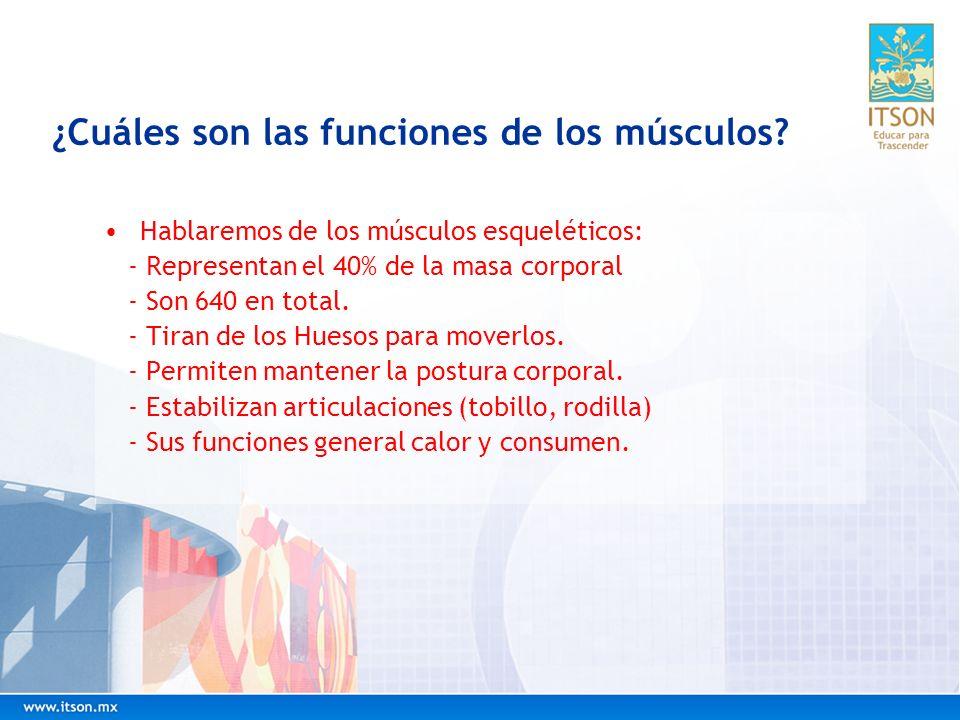 ¿Cuáles son las funciones de los músculos? Hablaremos de los músculos esqueléticos: - Representan el 40% de la masa corporal - Son 640 en total. - Tir