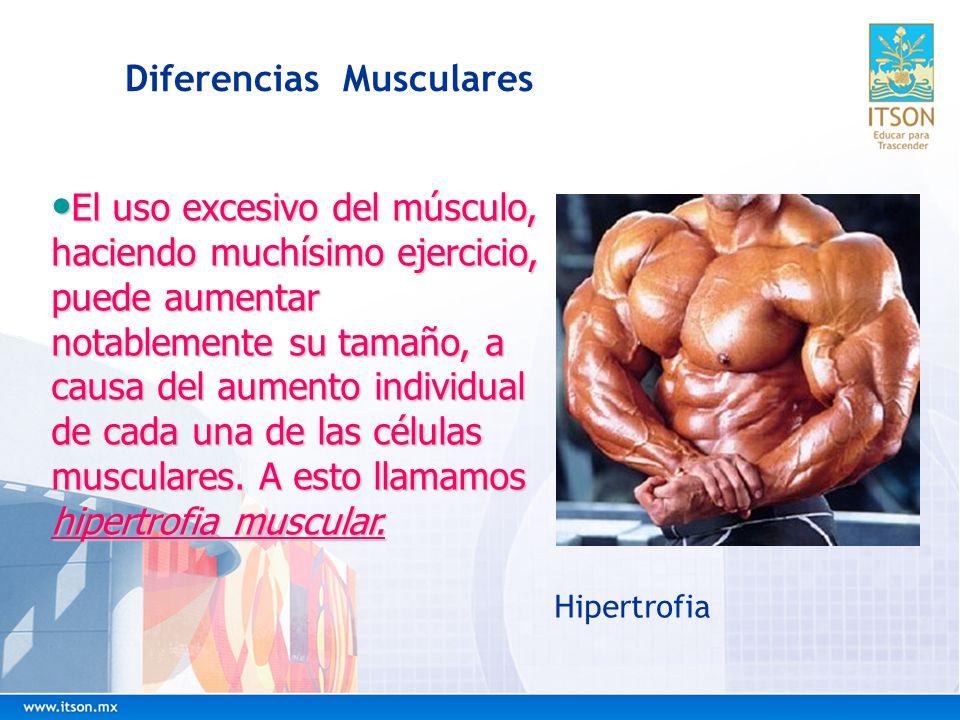 Diferencias Musculares El uso excesivo del músculo, haciendo muchísimo ejercicio, puede aumentar notablemente su tamaño, a causa del aumento individua