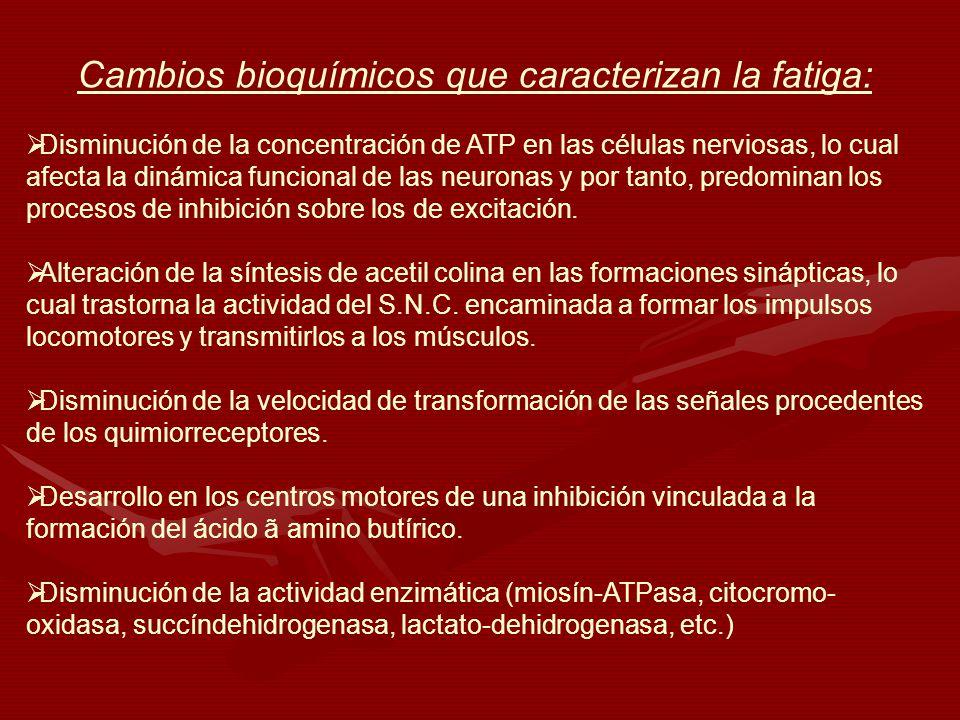 Cambios bioquímicos que caracterizan la fatiga: Disminución de la concentración de ATP en las células nerviosas, lo cual afecta la dinámica funcional
