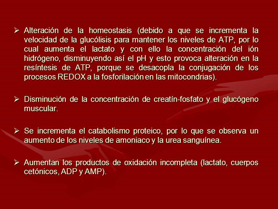 Alteración de la homeostasis (debido a que se incrementa la velocidad de la glucólisis para mantener los niveles de ATP, por lo cual aumenta el lactat