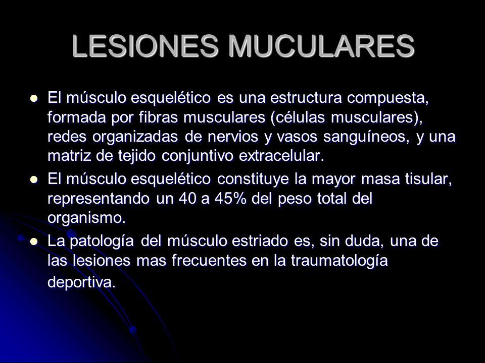 LESIONES MUCULARES El músculo esquelético es una estructura compuesta, formada por fibras musculares (células musculares), redes organizadas de nervio