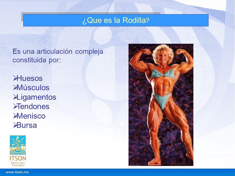 ¿Que es la Rodilla ? Es una articulación compleja constituida por: Huesos Músculos Ligamentos Tendones Menisco Bursa