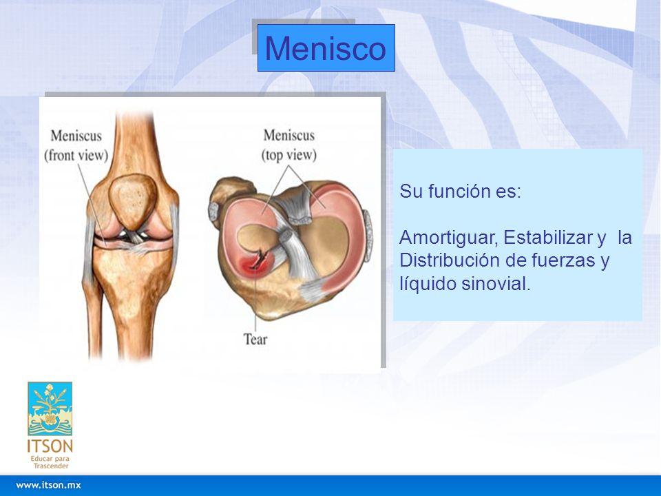 Duración del tratamiento Dependerá del grado de la lesión: (De 2 semanas hasta 8 según el grado de la lesión).
