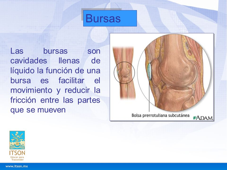 Bursas Las bursas son cavidades llenas de líquido la función de una bursa es facilitar el movimiento y reducir la fricción entre las partes que se mue