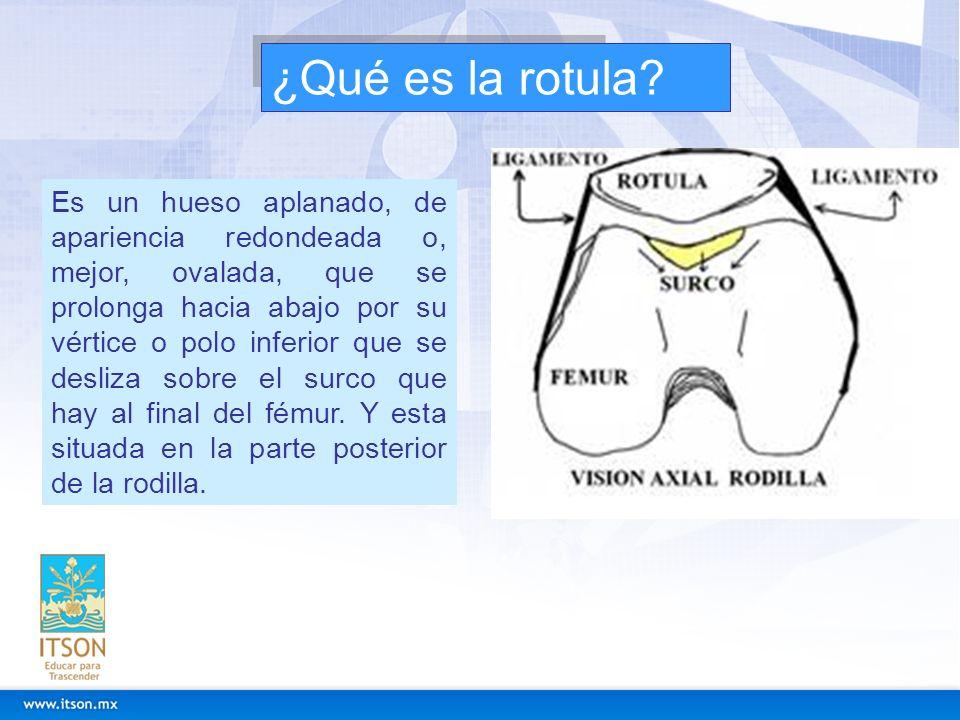 ¿Qué es la rotula? Es un hueso aplanado, de apariencia redondeada o, mejor, ovalada, que se prolonga hacia abajo por su vértice o polo inferior que se