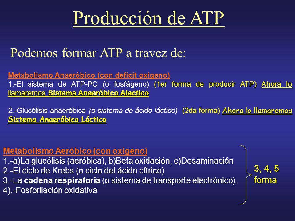 Metabolismo Anaeróbico (con deficit oxigeno) (1er forma de producir ATP) Ahora lo llamaremos Sistema Anaeróbico Alactico 1.-El sistema de ATP-PC (o fo