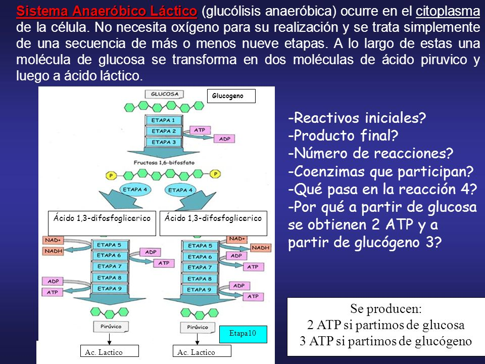 Enzimas que participan: Hexoquinasa Fosfofructoquinasa Aldolasa, triosa fosato isomerasa Deshidrogenasa Fosfogliceratquinasa Enolasa Piruvatoquinasa Acido Láctico Lactatodeshidrogenasa Fosfoglucomutasa y sin gasto de ATP GlucosaGlucogeno Aldehido fosfoglicérico Ácido fosfoenolpiruvico 1 3 2 5 4 6 8 7 9 10 Fosfogliceratomutasa Enzima que activa a la glucosa y la fosforila y a partir de que.