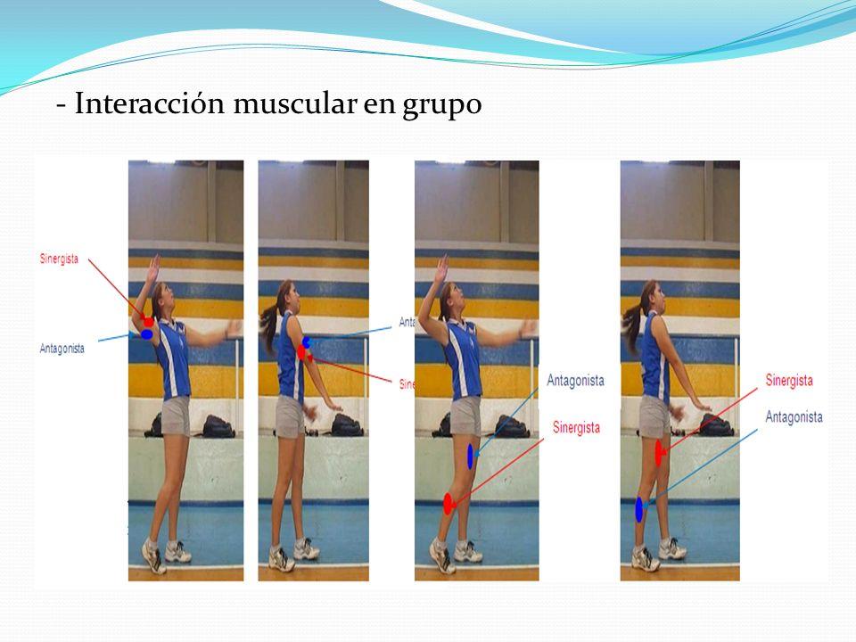 - Interacción muscular en grupo
