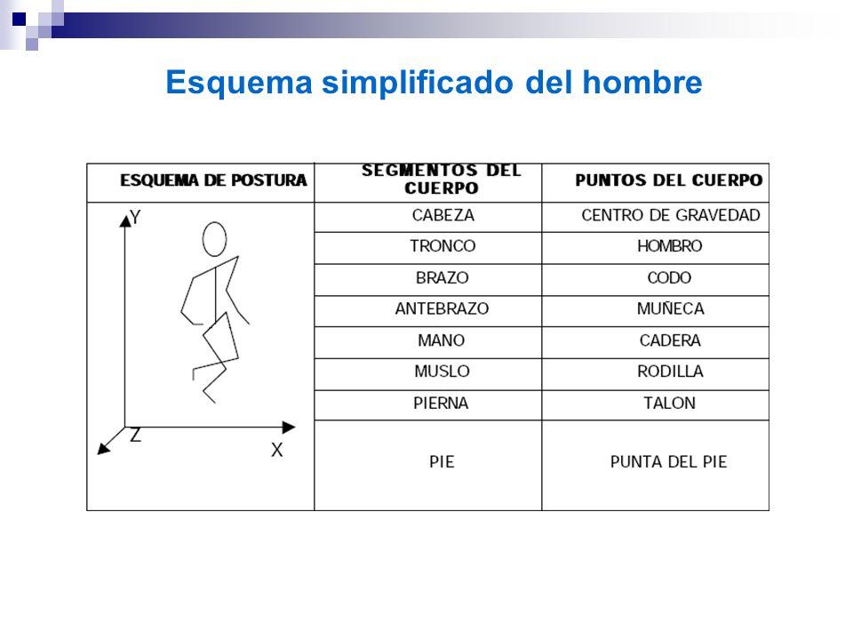 Esquema simplificado del hombre