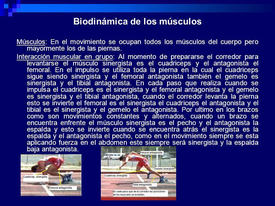 Biodinámica de los músculos Músculos: En el movimiento se ocupan todos los músculos del cuerpo pero mayormente los de las piernas. Interacción muscula