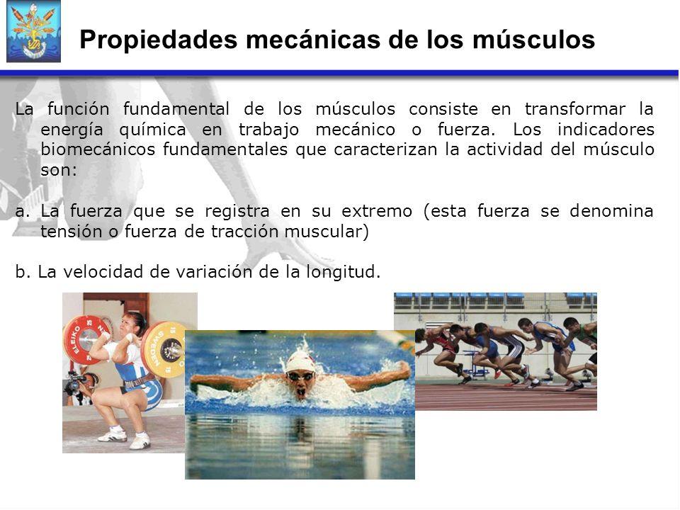 Propiedades mecánicas de los músculos La función fundamental de los músculos consiste en transformar la energía química en trabajo mecánico o fuerza.