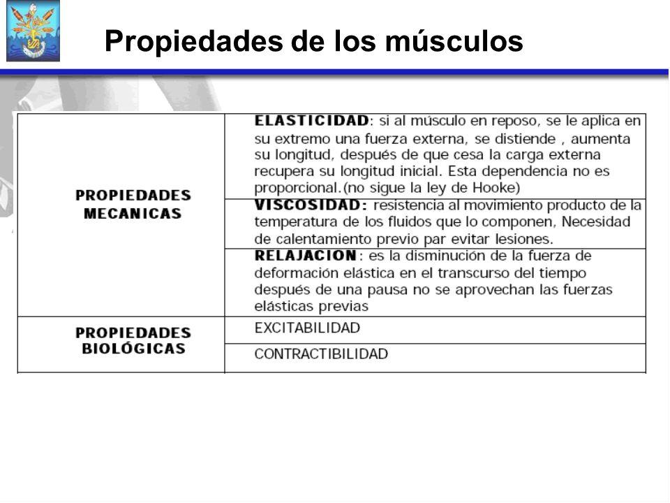 Propiedades de los músculos