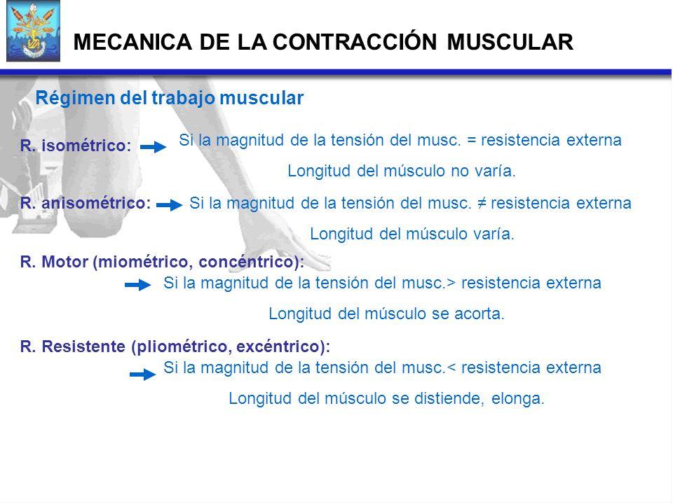 Régimen del trabajo muscular R. isométrico: R. anisométrico: R. Motor (miométrico, concéntrico): R. Resistente (pliométrico, excéntrico): Si la magnit