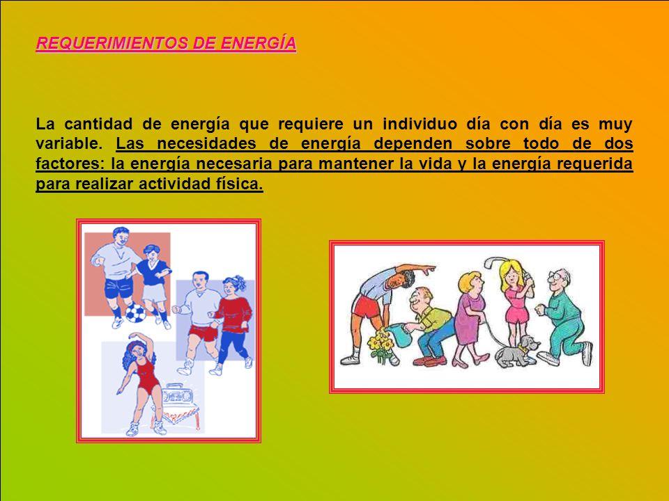 REQUERIMIENTOS DE ENERGÍA La cantidad de energía que requiere un individuo día con día es muy variable. Las necesidades de energía dependen sobre todo