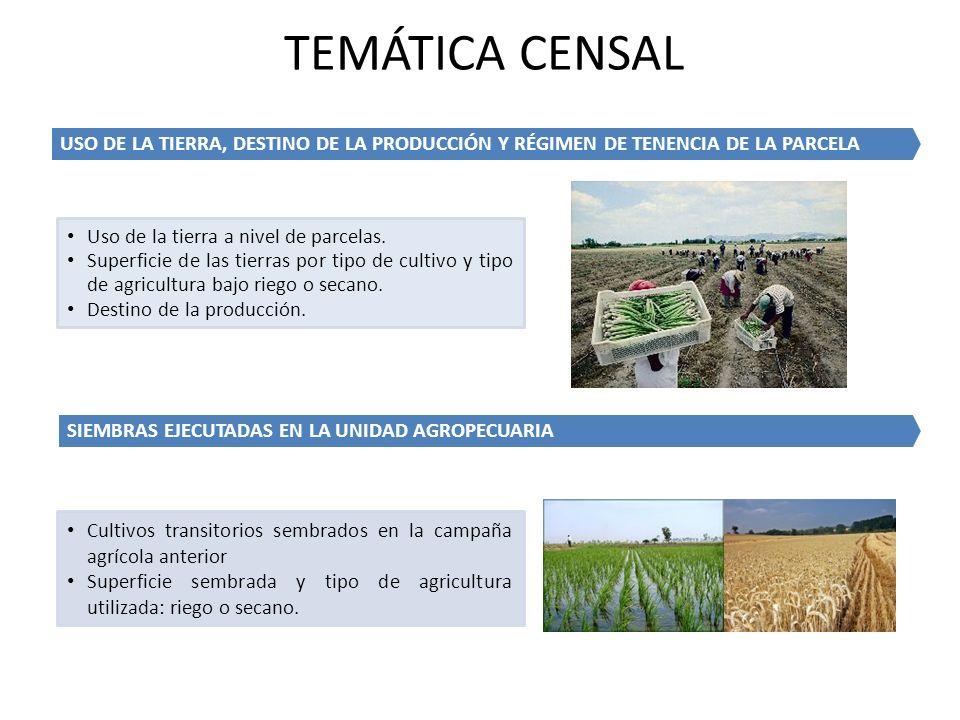 USO DE LA TIERRA, DESTINO DE LA PRODUCCIÓN Y RÉGIMEN DE TENENCIA DE LA PARCELA Uso de la tierra a nivel de parcelas. Superficie de las tierras por tip
