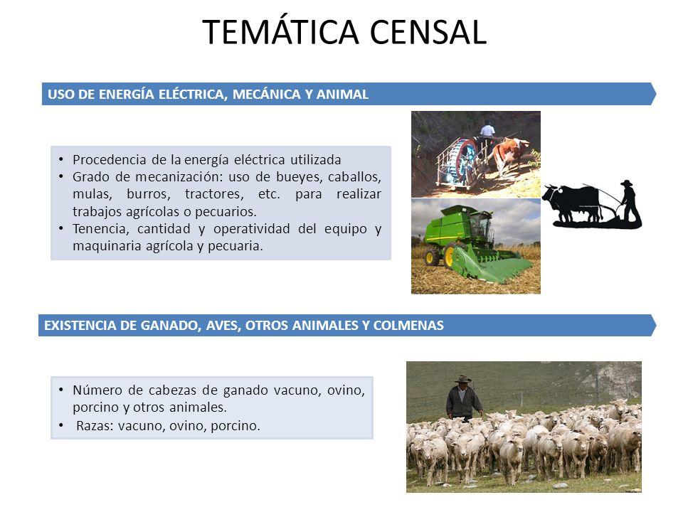 Número de cabezas de ganado vacuno, ovino, porcino y otros animales. Razas: vacuno, ovino, porcino. EXISTENCIA DE GANADO, AVES, OTROS ANIMALES Y COLME