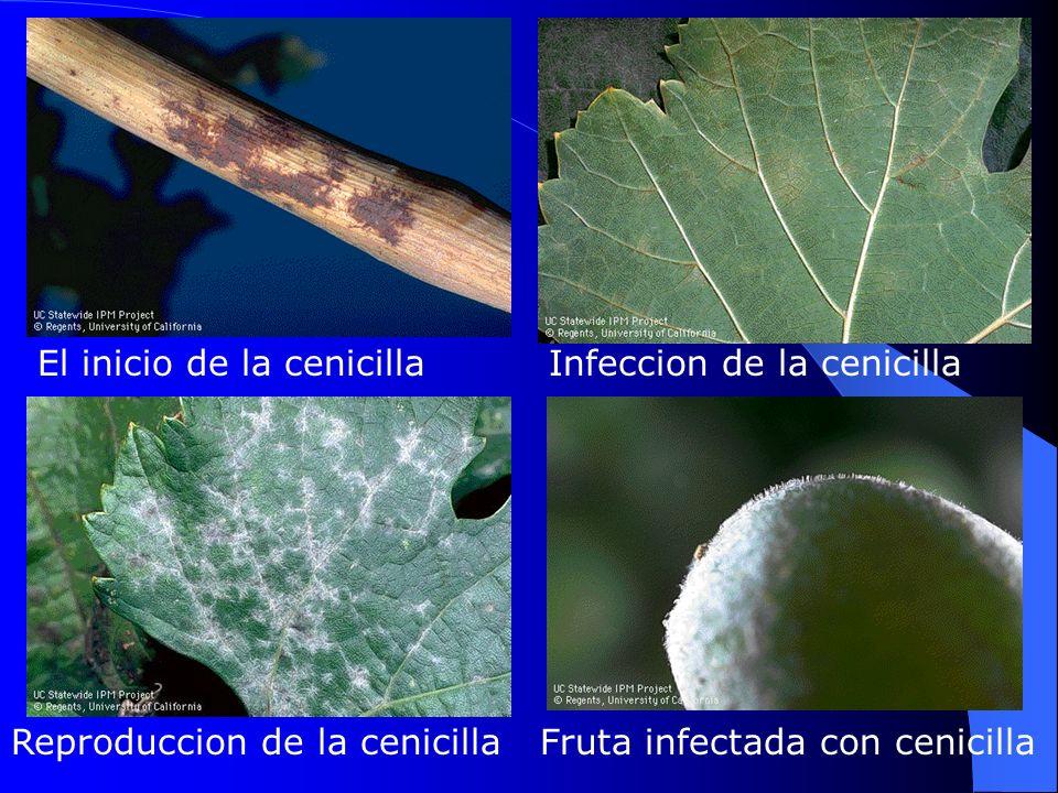 La razón por la cual se le da uso al azufre en los viñedos.