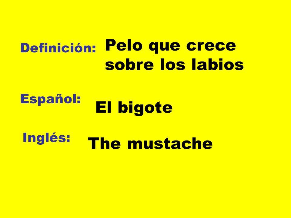 Definición: Español: Inglés: Pelo que crece sobre los labios El bigote The mustache