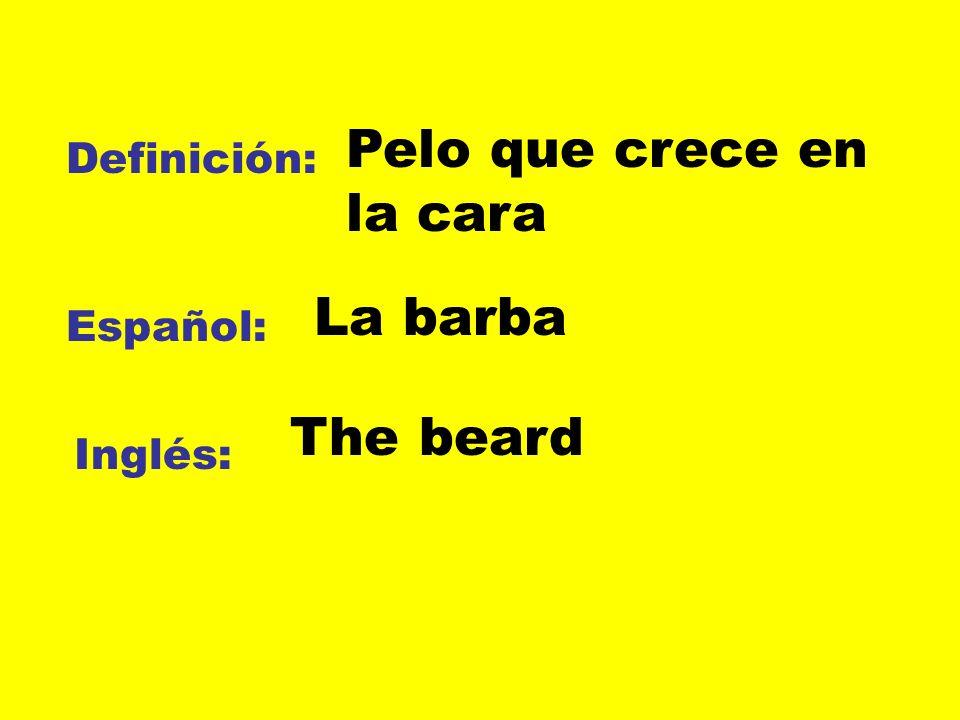 Definición: Español: Inglés: Pelo que crece en la cara La barba The beard