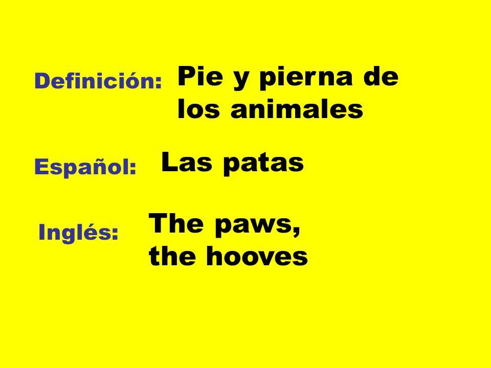 Definición: Español: Inglés: Pie y pierna de los animales Las patas The paws, the hooves