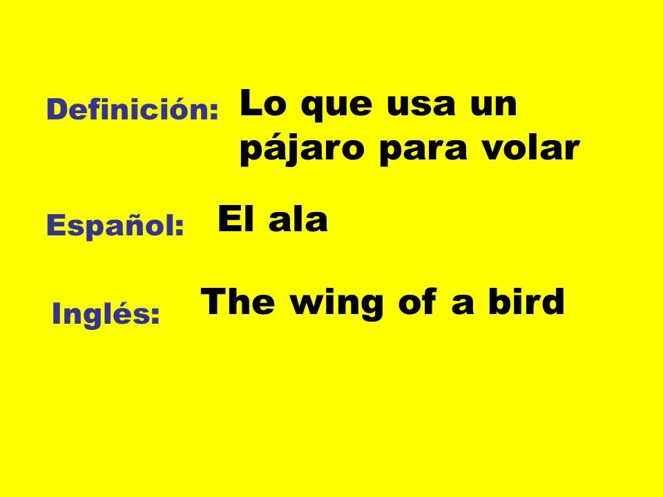 Definición: Español: Inglés: Lo que usa un pájaro para volar El ala The wing of a bird
