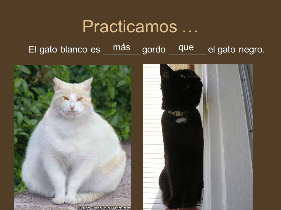 Practicamos … El gato blanco es _______ gordo _______ el gato negro. másque
