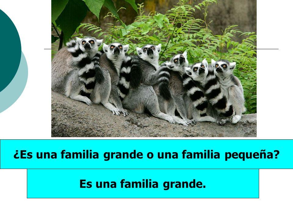 ¿Es una familia grande o una familia pequeña? Es una familia grande.