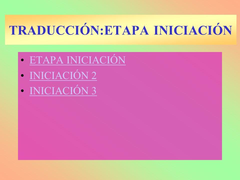 TRADUCCIÓN:ETAPA ELONGACIÓN 4 Subetapas : –Llegada de un aminoacil ARNt al sitio A.