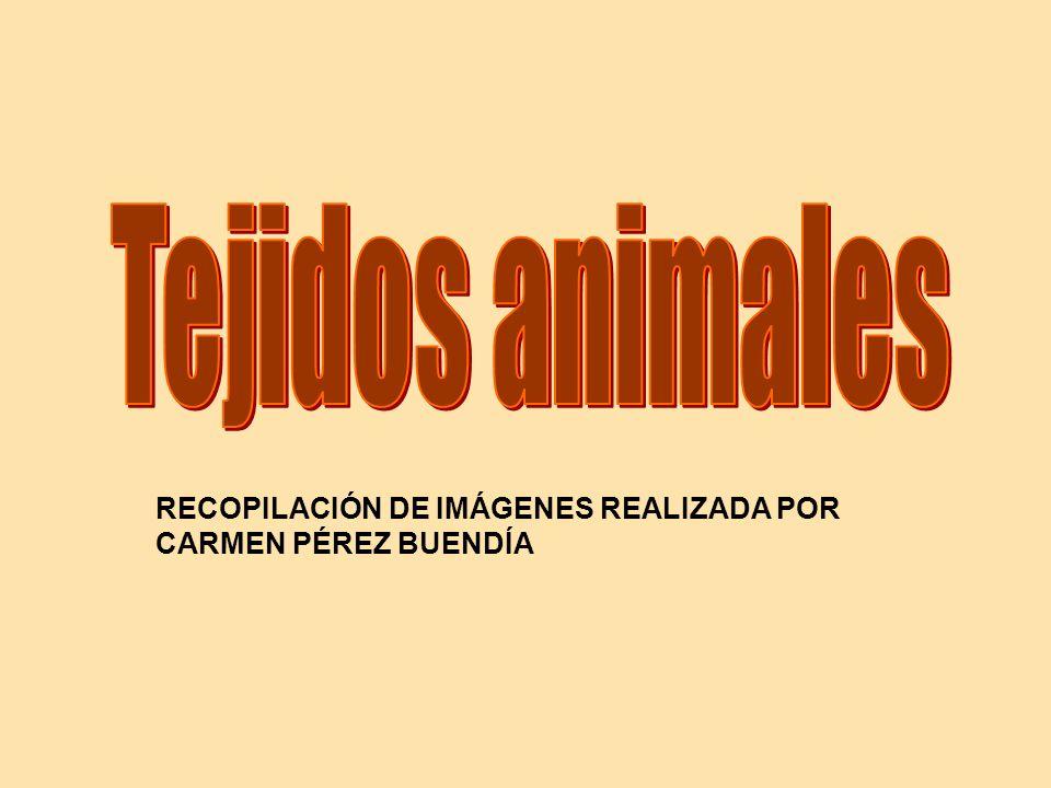 RECOPILACIÓN DE IMÁGENES REALIZADA POR CARMEN PÉREZ BUENDÍA