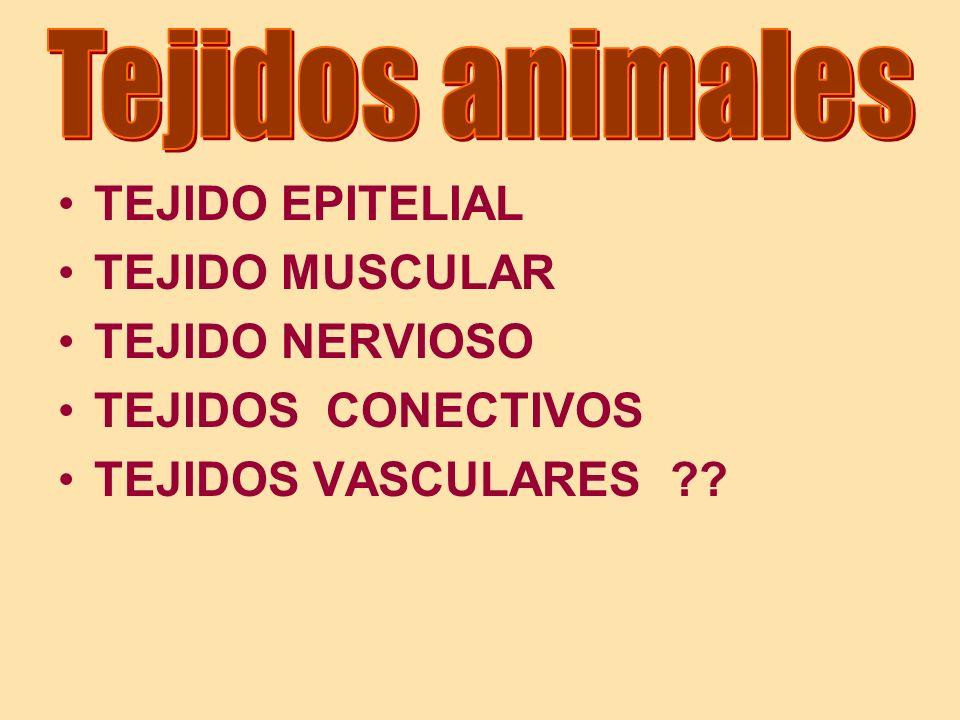 Tejidos conectivos (I).