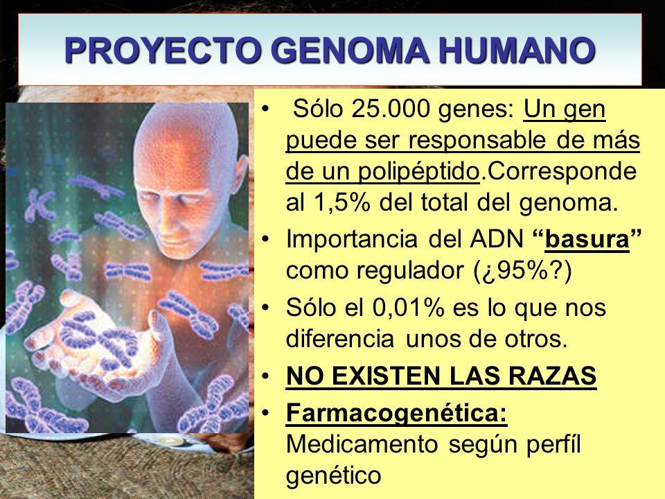 PROYECTO GENOMA HUMANO James Watson Sólo 25.000 genes: Un gen puede ser responsable de más de un polipéptido.Corresponde al 1,5% del total del genoma.