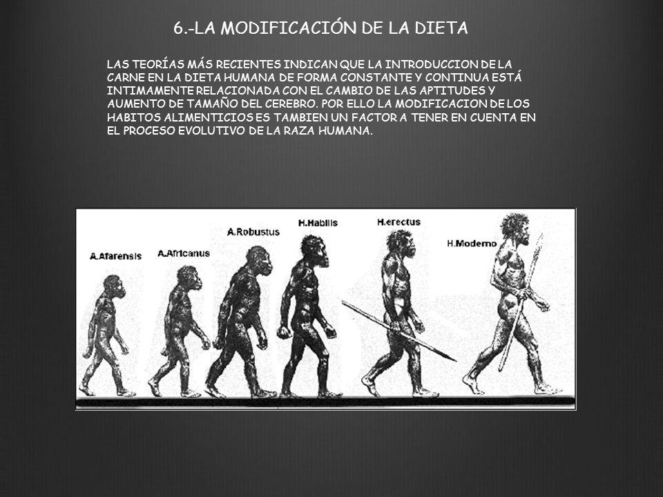 6.-LA MODIFICACIÓN DE LA DIETA LAS TEORÍAS MÁS RECIENTES INDICAN QUE LA INTRODUCCION DE LA CARNE EN LA DIETA HUMANA DE FORMA CONSTANTE Y CONTINUA ESTÁ
