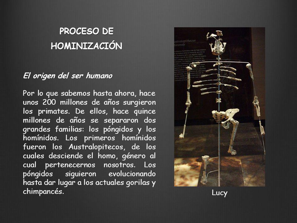 El origen del ser humano Por lo que sabemos hasta ahora, hace unos 200 millones de años surgieron los primates. De ellos, hace quince millones de años