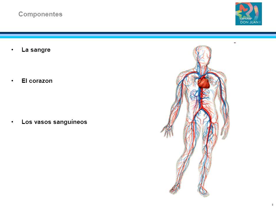La sangre El corazon Los vasos sanguíneos Componentes 8