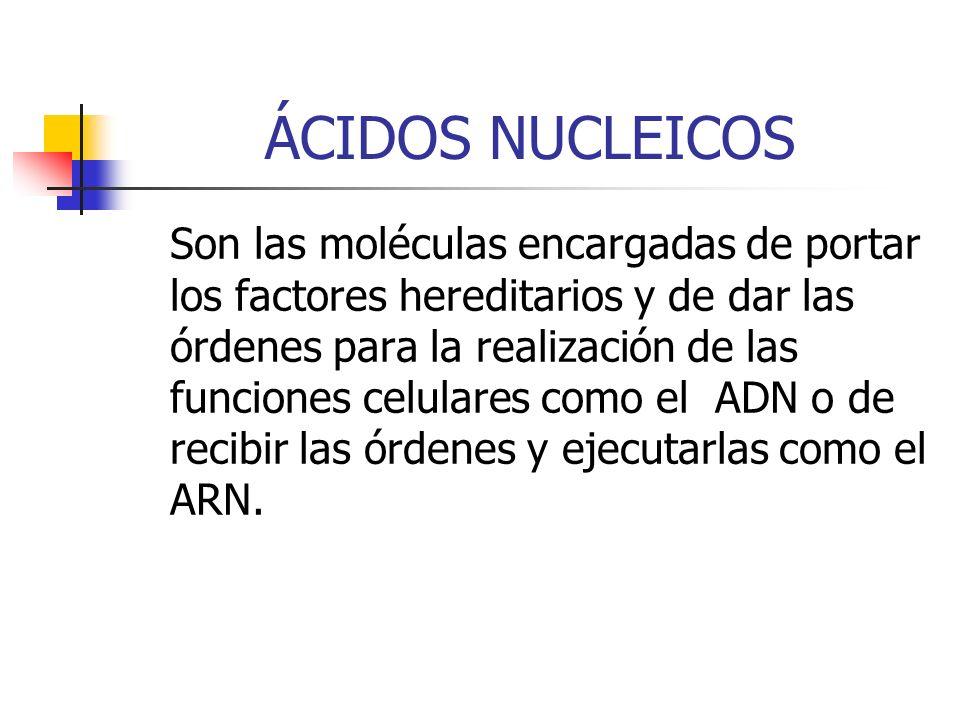 ÁCIDOS NUCLEICOS Son las moléculas encargadas de portar los factores hereditarios y de dar las órdenes para la realización de las funciones celulares