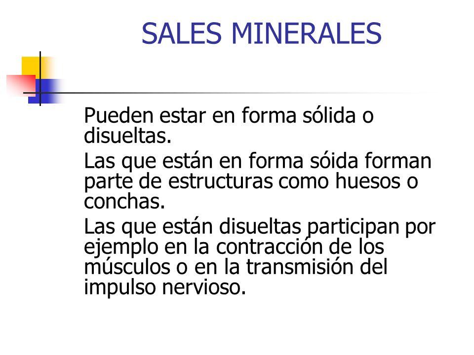SALES MINERALES Pueden estar en forma sólida o disueltas. Las que están en forma sóida forman parte de estructuras como huesos o conchas. Las que está