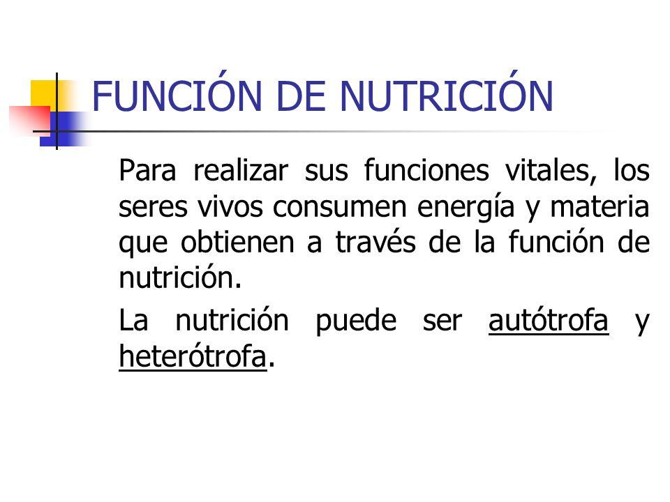 FUNCIÓN DE NUTRICIÓN Para realizar sus funciones vitales, los seres vivos consumen energía y materia que obtienen a través de la función de nutrición.