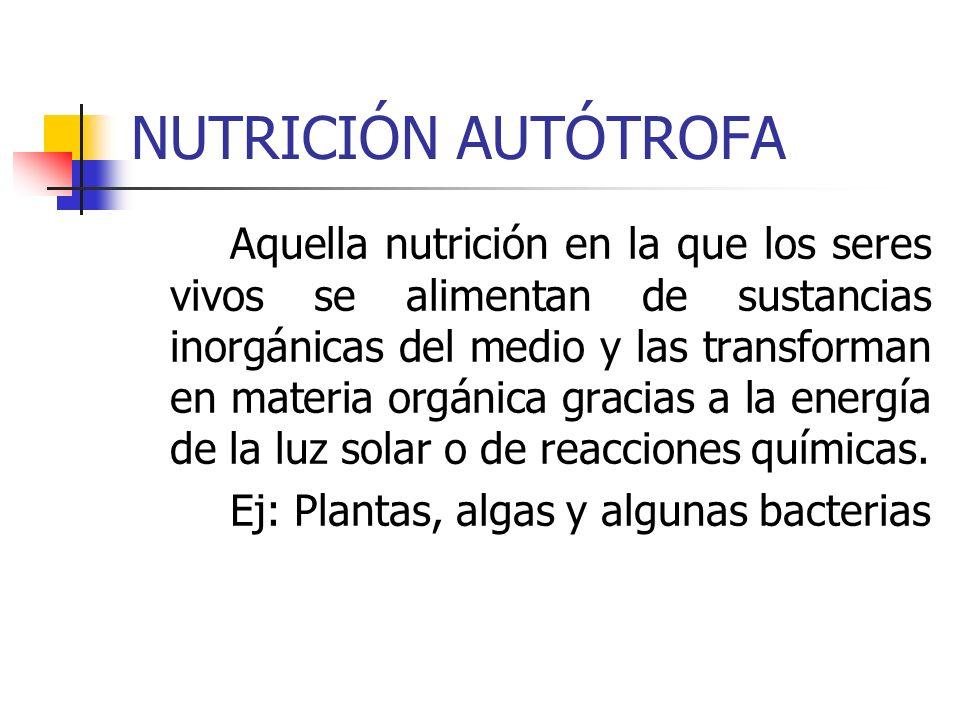 NUTRICIÓN AUTÓTROFA Aquella nutrición en la que los seres vivos se alimentan de sustancias inorgánicas del medio y las transforman en materia orgánica