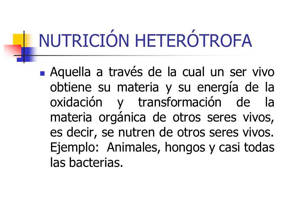 NUTRICIÓN HETERÓTROFA Aquella a través de la cual un ser vivo obtiene su materia y su energía de la oxidación y transformación de la materia orgánica