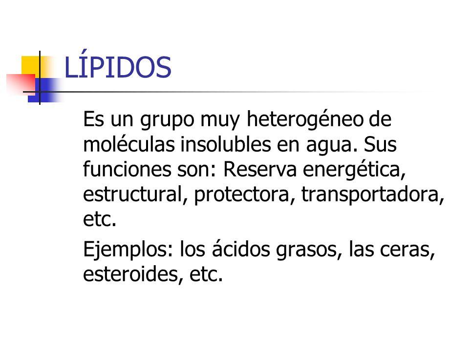LÍPIDOS Es un grupo muy heterogéneo de moléculas insolubles en agua. Sus funciones son: Reserva energética, estructural, protectora, transportadora, e