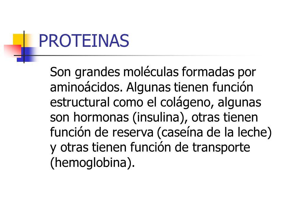 PROTEINAS Son grandes moléculas formadas por aminoácidos. Algunas tienen función estructural como el colágeno, algunas son hormonas (insulina), otras