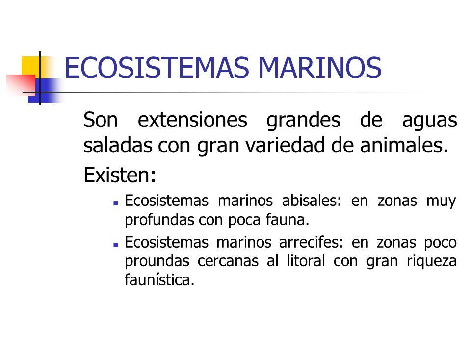 ECOSISTEMAS MARINOS Son extensiones grandes de aguas saladas con gran variedad de animales. Existen: Ecosistemas marinos abisales: en zonas muy profun